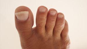 foot-2-1233803-m