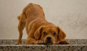 nice-dog-1413127-m
