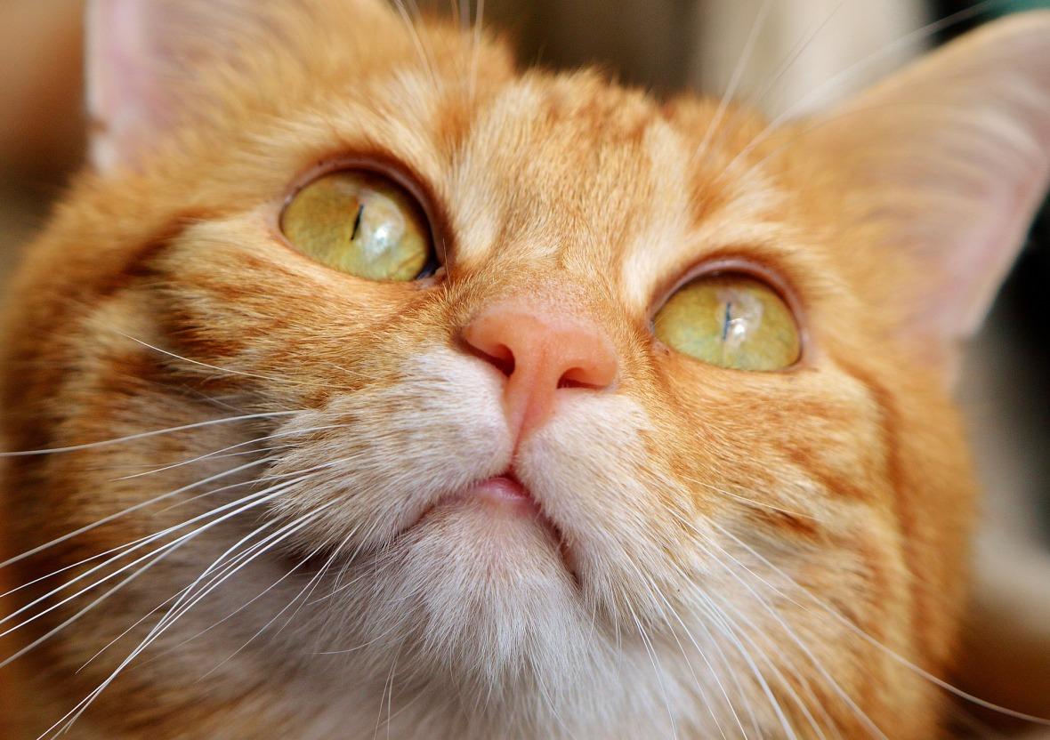 cat-3061684_1920